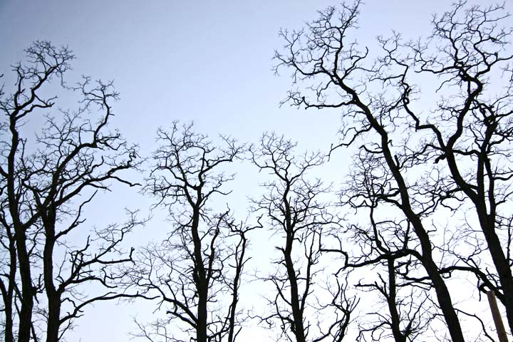 Tree_Branches_At_Dusk.jpg (720×480)